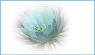 Moon Flower - Grace Munday