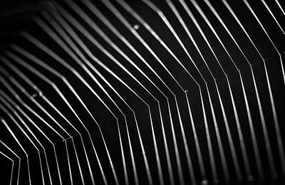 Web Detail - Sheila Burrow