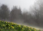 Spring Fog - Ann Jones