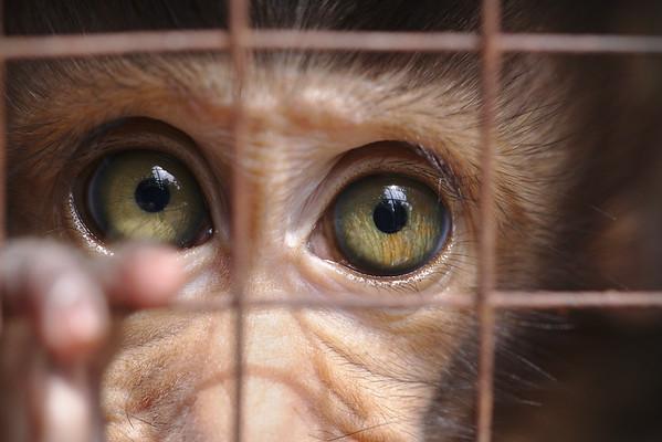 Caged - Steve Crossley