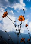 Reaching for the Sky - Ann Jones