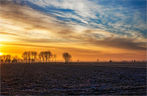 Frosty Morning - Jocelyn Manning