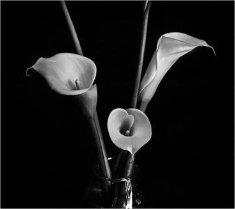 Lilies - Jocelyn Manning