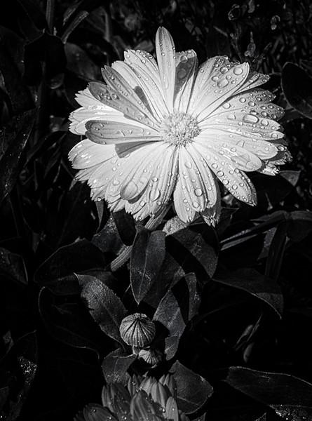 Bud 'n Bloom - Elaine Reynolds