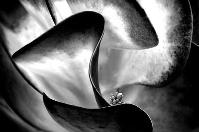 Succulent - Grace Munday