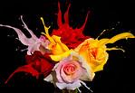 Colour Splash - Ray Ross
