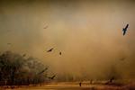 Wildfire Flight - Richard Goodwin