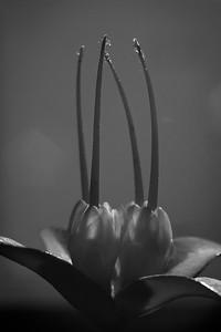 Darwinia - Hans Wellinger