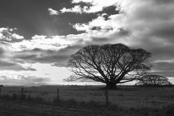 Trees at Dusk - Gerrit van Zee