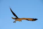 Spreading my Wings - Grace Munday
