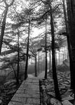 Misty Yellow Mountain Path - Susan Moss