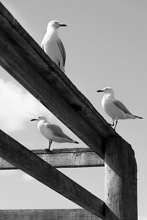 Bird Watch - Gerrit van Zee