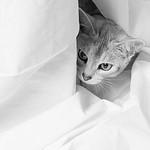 Hiding - Michele Augustyn