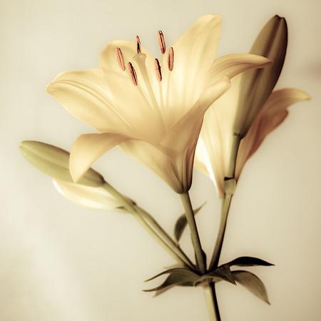 Creamy, Dreamy - Richard Goodwin