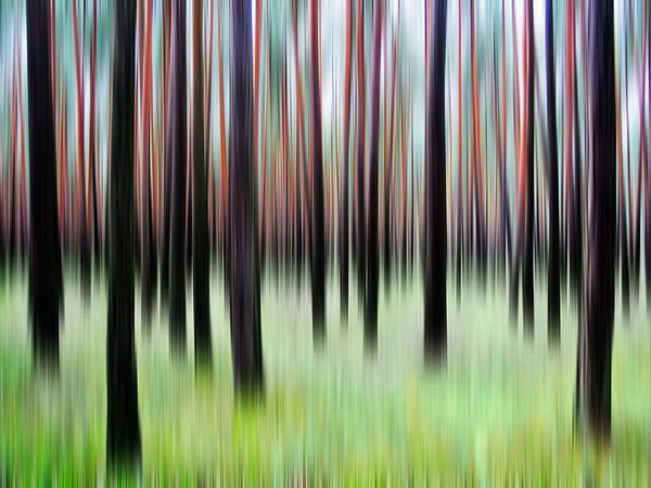 Magical Forest - Stan Bendkowski