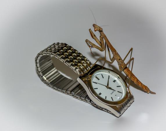 Watch - John Hunt