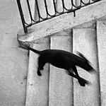 Black Dog Running - Lee Bickford