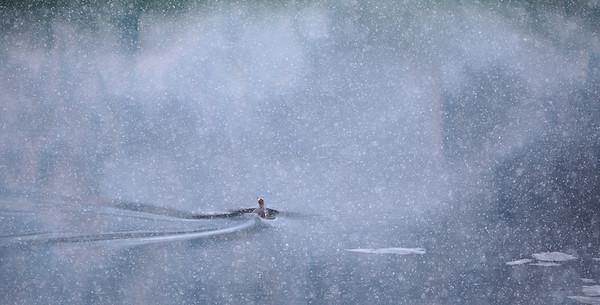 Lost in the Snow - Steve Crossley