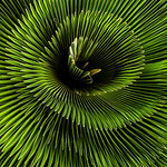 Natural Spiral - Kim McAvoy