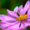 A Flower's Anthers - Lemuel Tan