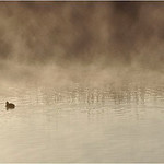 Fog on Lake - Bruce Finkelstein