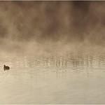 Fog on Lake - Bruce Finkelstein
