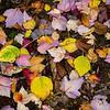 Fallen Leaves - Amandy Blanksby