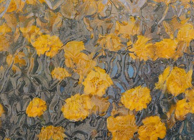 Marigolds - David White