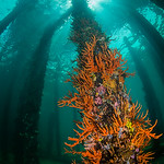 Looking Up, Busselton Jetty - Amanda Blanksby