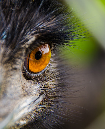 Eye See - Kim McAvoy