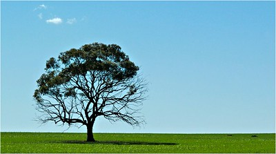 Lonely Tree - Bruce Finkelstein