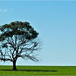 Lonely Tree - Bruce Finkelstein