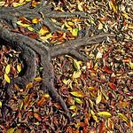 Autumn - Dick Beilby
