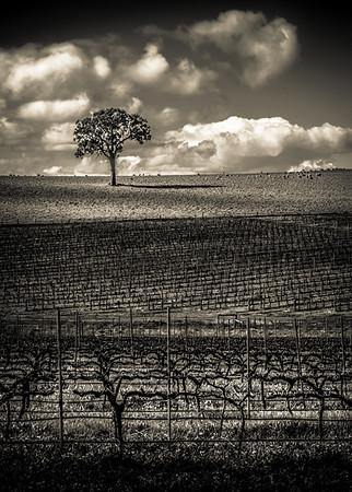 Lines, Vines and Tree - Lemuel Tan