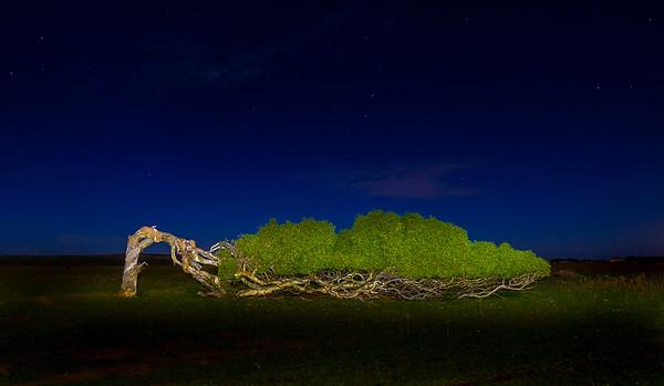 The Sleeping Tree - Martin Yates