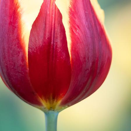Nature's Colours - Robert Woodbury