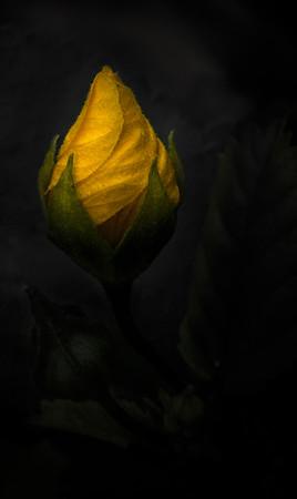 The Yellow Bud - Lemuel Tan