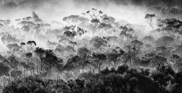 Misty Valley - Kim McAvoy