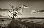 Last Tree Standing - Elaine Reynolds