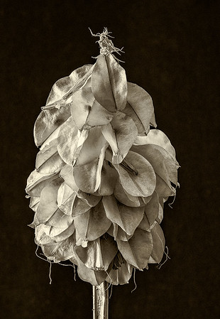 Seed Pods - Ray Ross
