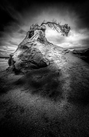 Nature's Bend - Lemuel Tan