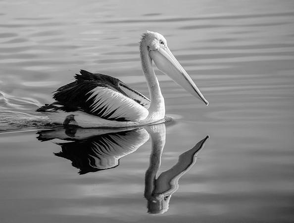 Morning Paddle - Michele Augustyn