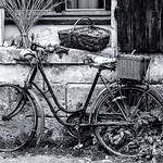 The Old Bike - Susan Moss