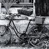 The Old Bike - Susan Moss