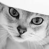 Cat's Eyes - Michele Augustyn