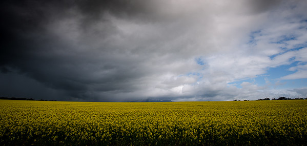 Storm Front - Elaine Reynolds