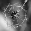 Fairy Wheel - Greg Bilton