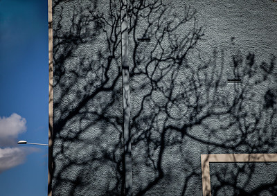 Winter Sun - Lee Bickford