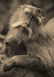 Bliss Monkey - Steve Crossley