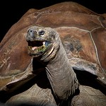 Seychelles Centenarian  - Steve Brown